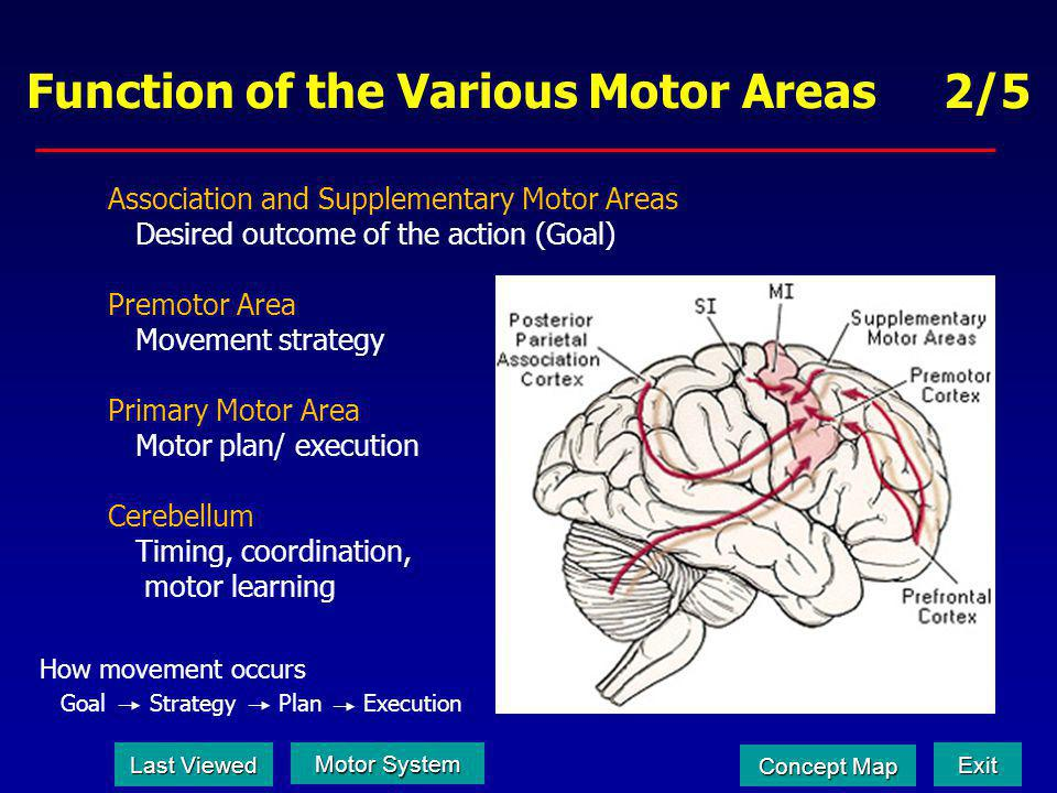Function of the Various Motor Areas 2/5