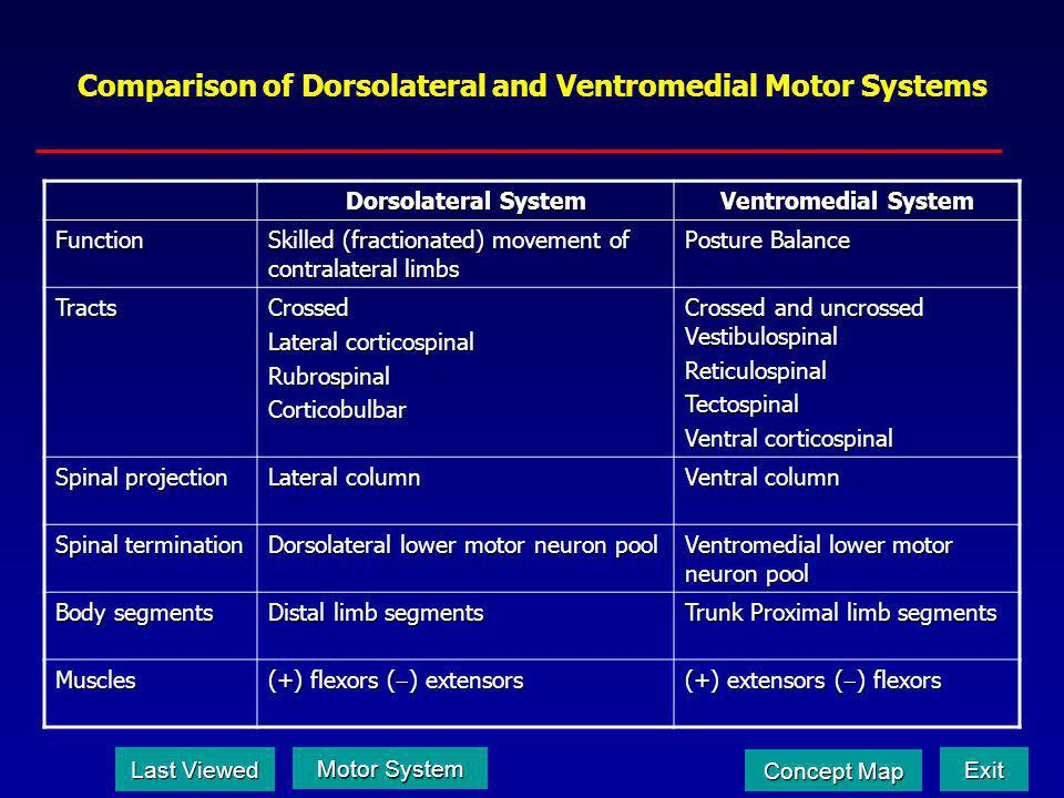 Comparison of Dorsolateral and Ventromedial Motor Systems