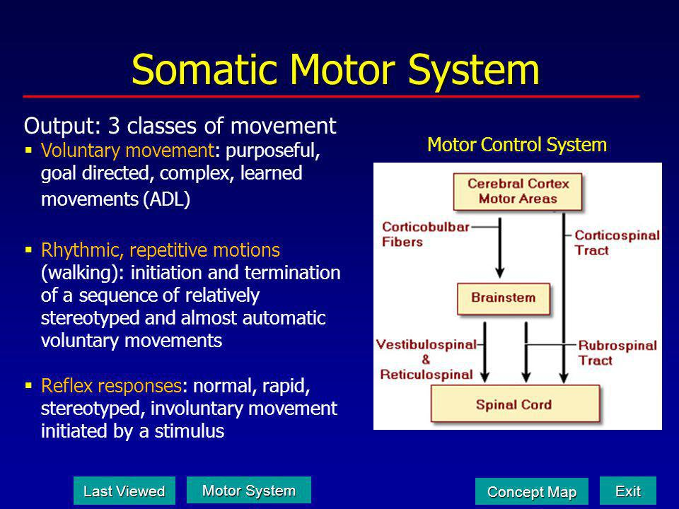 Somatic Motor System Output: 3 classes of movement