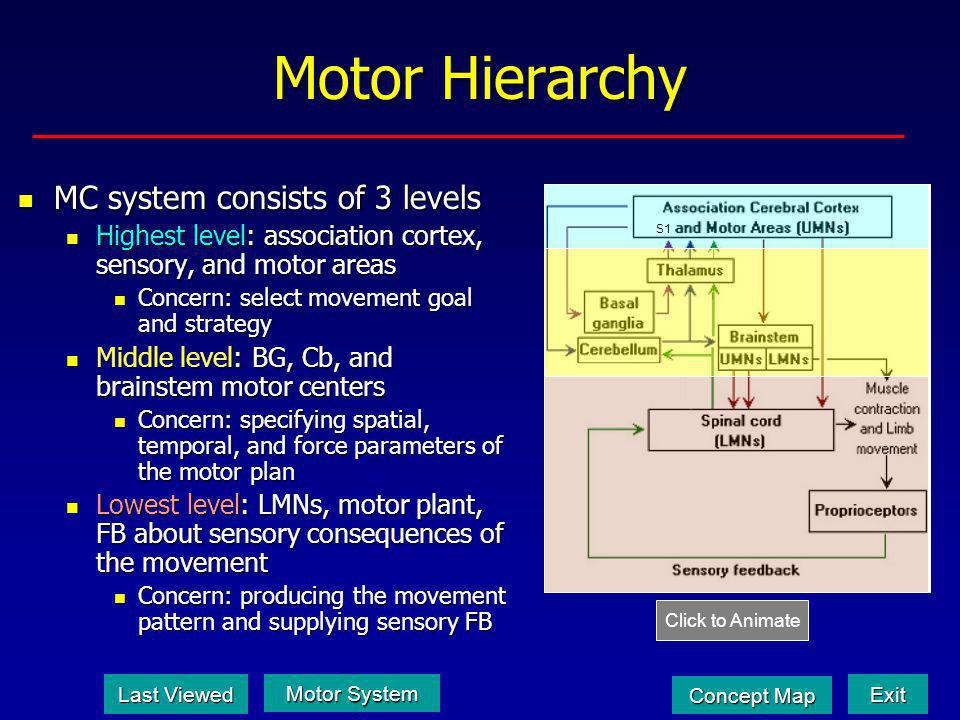 Motor Hierarchy MC system consists of 3 levels