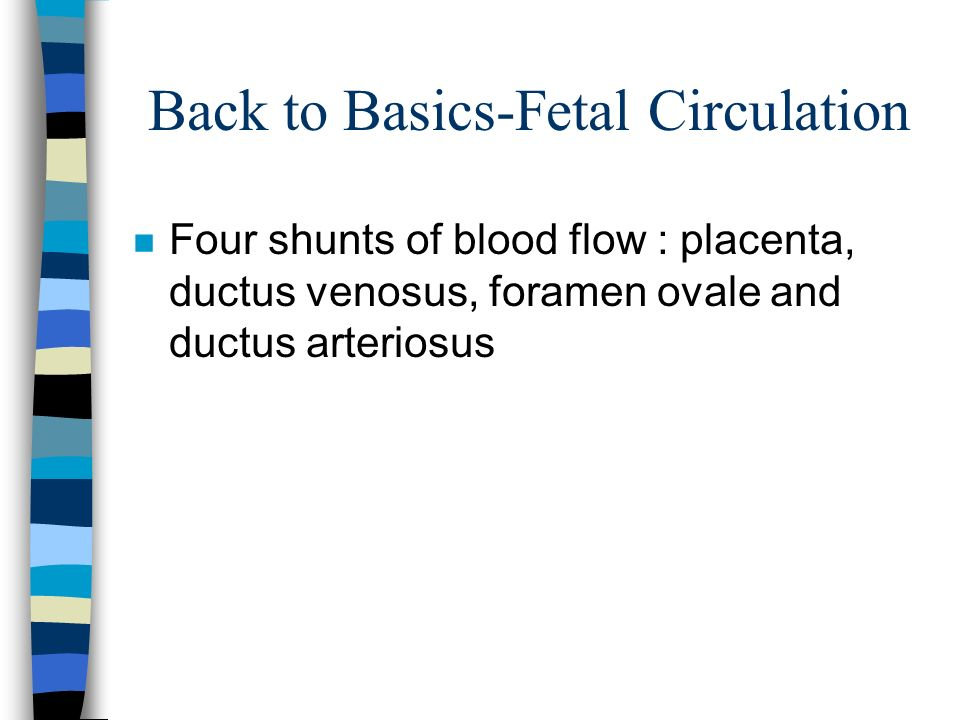 Back to Basics-Fetal Circulation