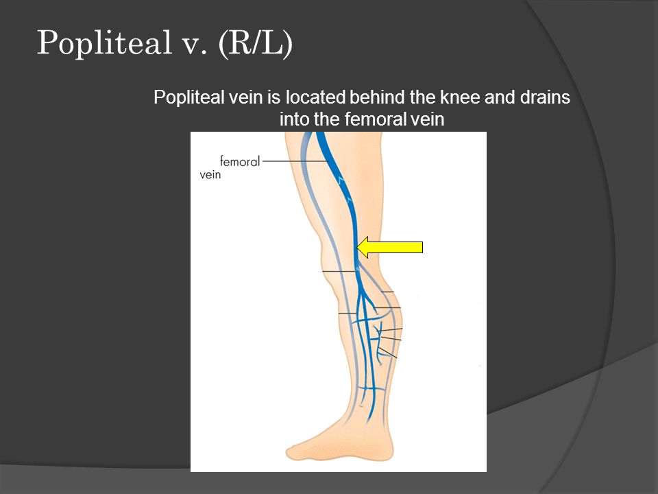 Popliteal v. (R/L) Popliteal vein is located behind the knee and drains into the femoral vein