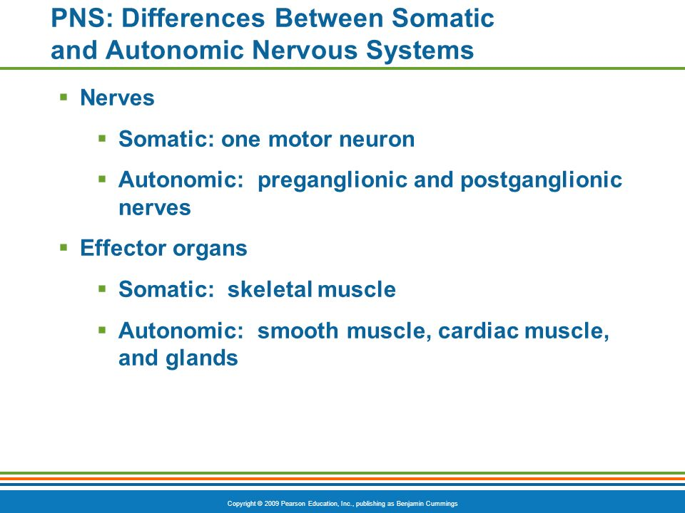 PNS: Differences Between Somatic and Autonomic Nervous Systems