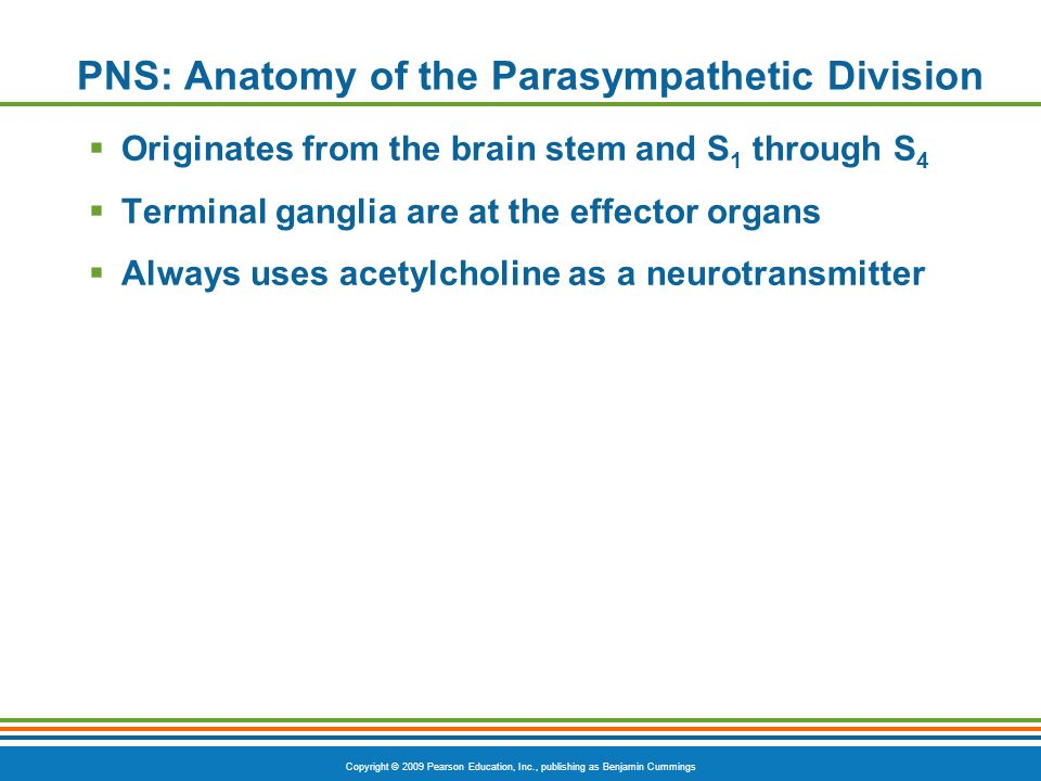 PNS: Anatomy of the Parasympathetic Division