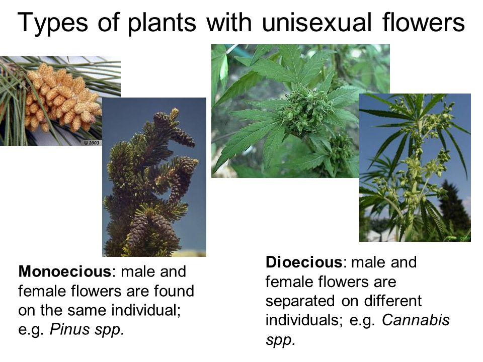Types of plants with unisexual flowers