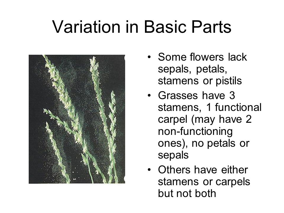 Variation in Basic Parts