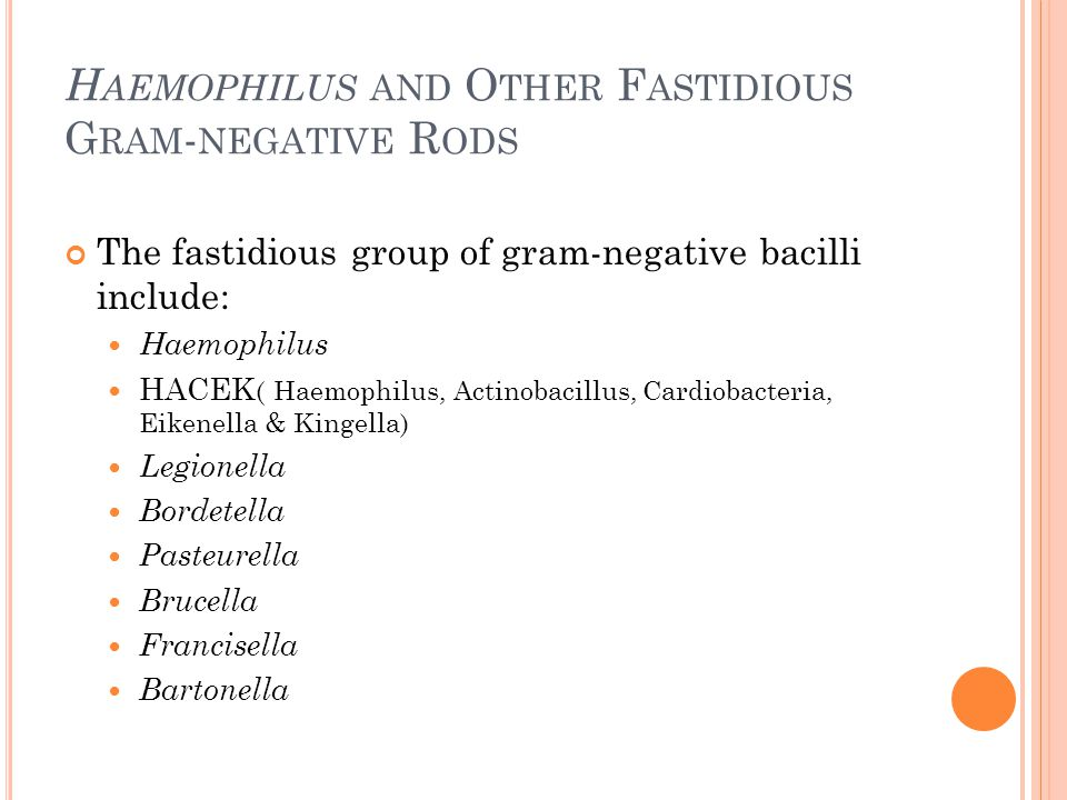 Haemophilus and Other Fastidious Gram-negative Rods