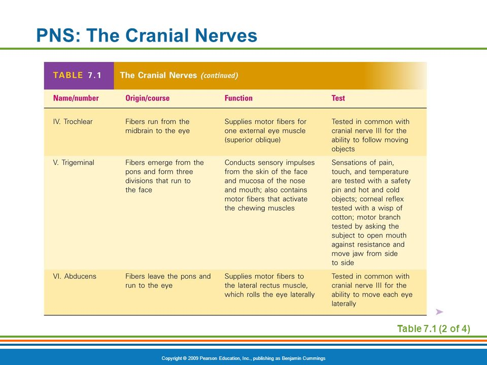 PNS: The Cranial Nerves
