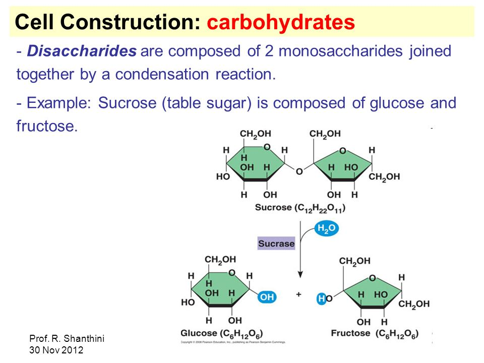 Cell Construction: carbohydrates