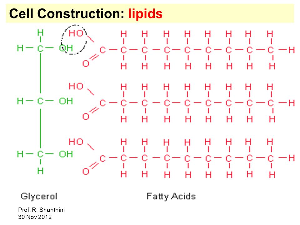 Cell Construction: lipids