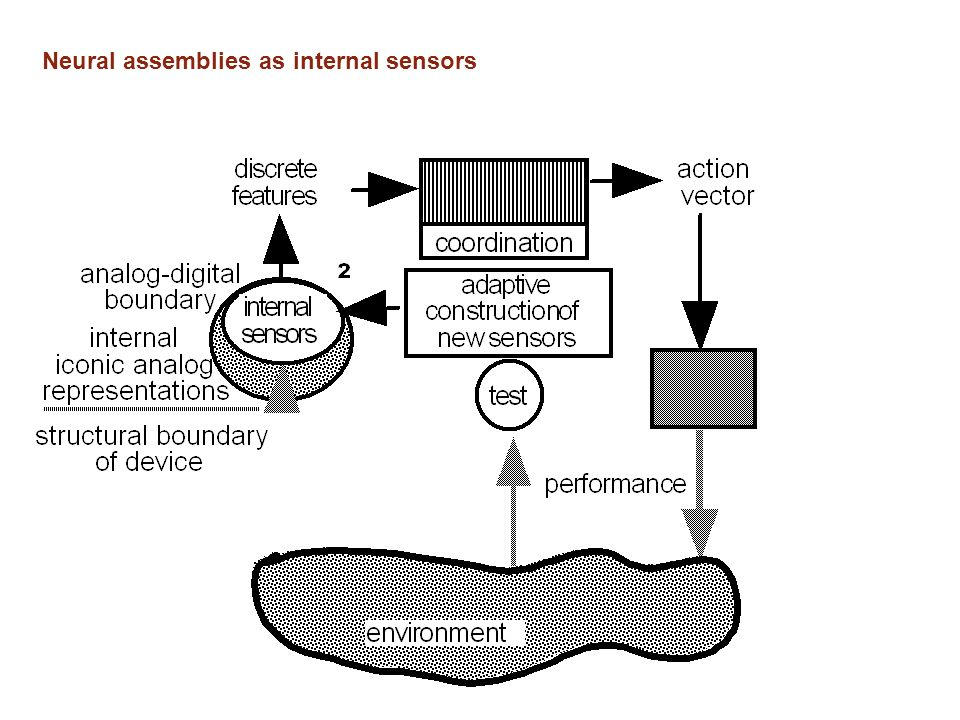 Neural assemblies as internal sensors