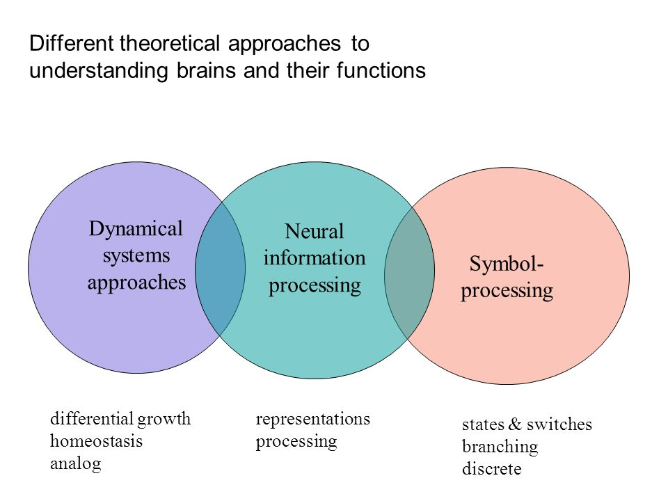 Different theoretical approaches to understanding brains and their functions