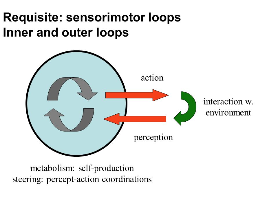 Requisite: sensorimotor loops Inner and outer loops