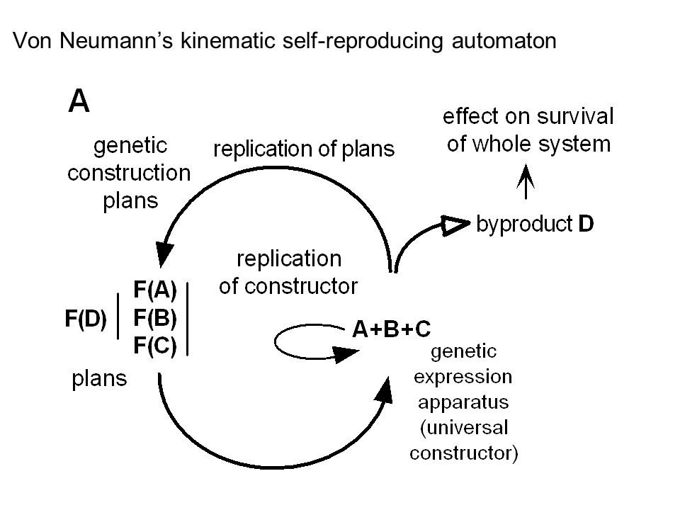 Von Neumann's kinematic self-reproducing automaton