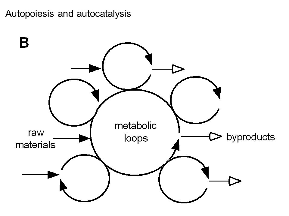 Autopoiesis and autocatalysis
