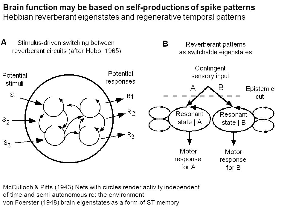 Brain function may be based on self-productions of spike patterns Hebbian reverberant eigenstates and regenerative temporal patterns