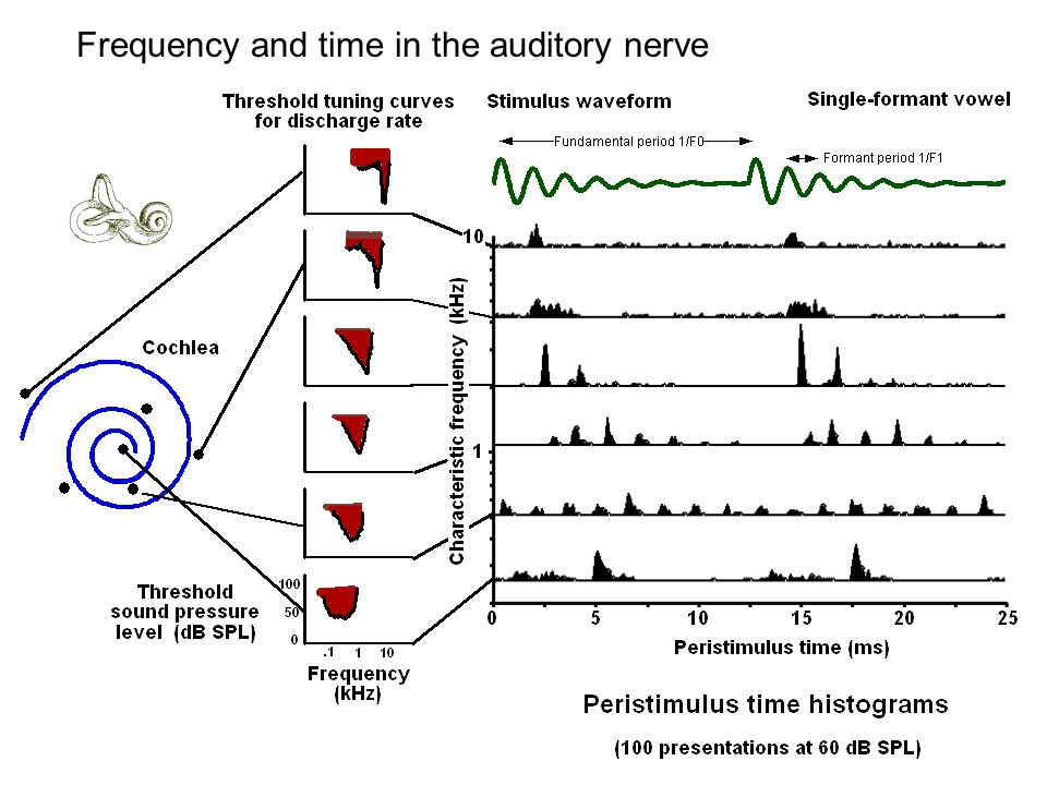 Frequency and time in the auditory nerve