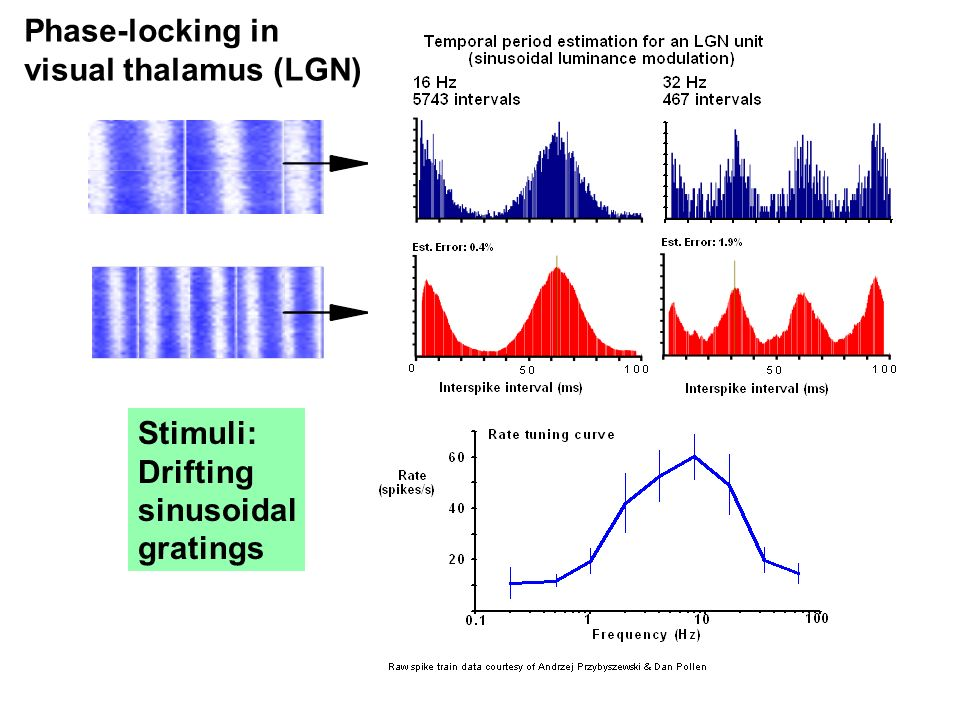 Phase-locking in visual thalamus (LGN) Stimuli: Drifting sinusoidal gratings