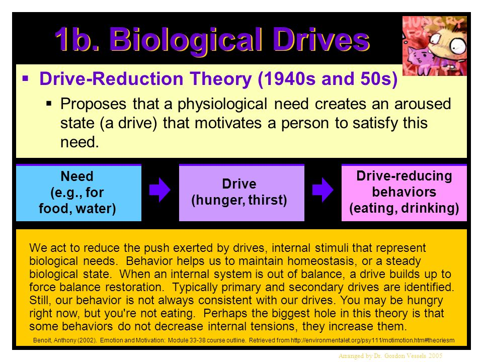 1b. Biological Drives Drive-Reduction Theory (1940s and 50s)