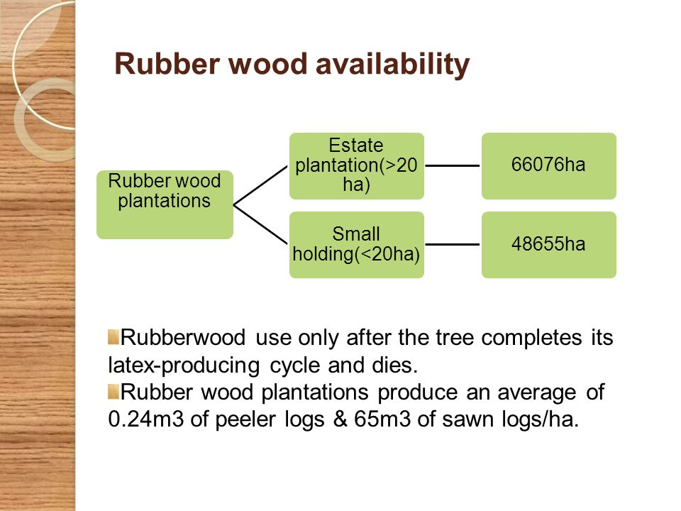 Rubber wood availability