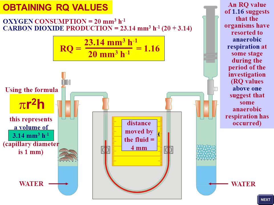 pr2h OBTAINING RQ VALUES 23.14 mm3 h-1 RQ = = 1.16 20 mm3 h-1