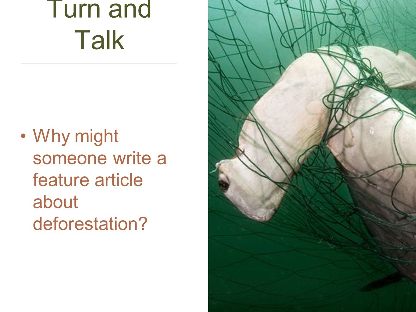Turn and Talk Why might someone write a feature article about deforestation