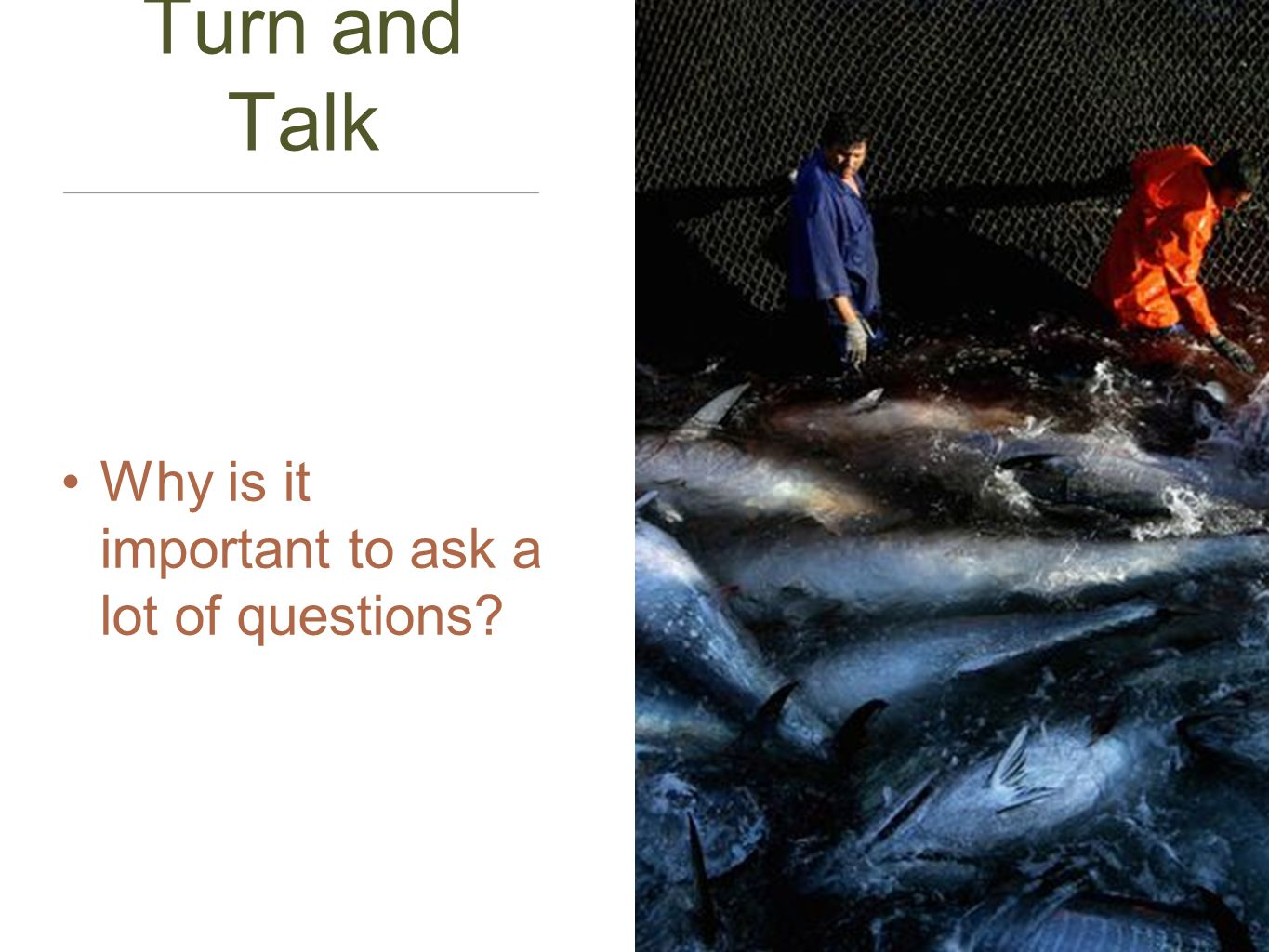 Turn and Talk Why is it important to ask a lot of questions
