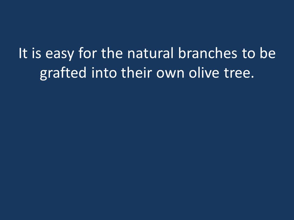 It is easy for the natural branches to be grafted into their own olive tree.