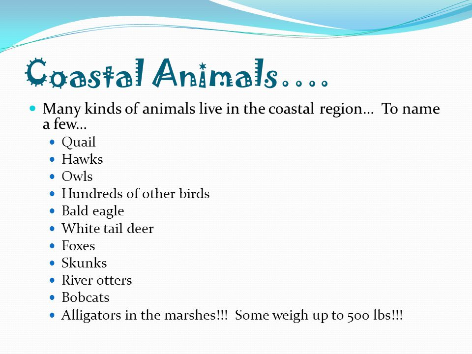 Coastal Animals…. Many kinds of animals live in the coastal region… To name a few… Quail. Hawks.