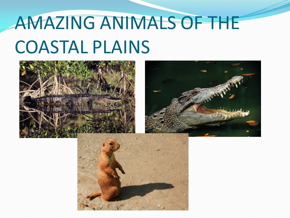 AMAZING ANIMALS OF THE COASTAL PLAINS