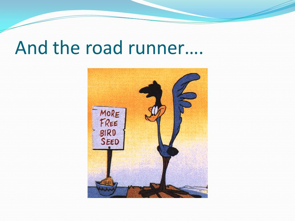 And the road runner….