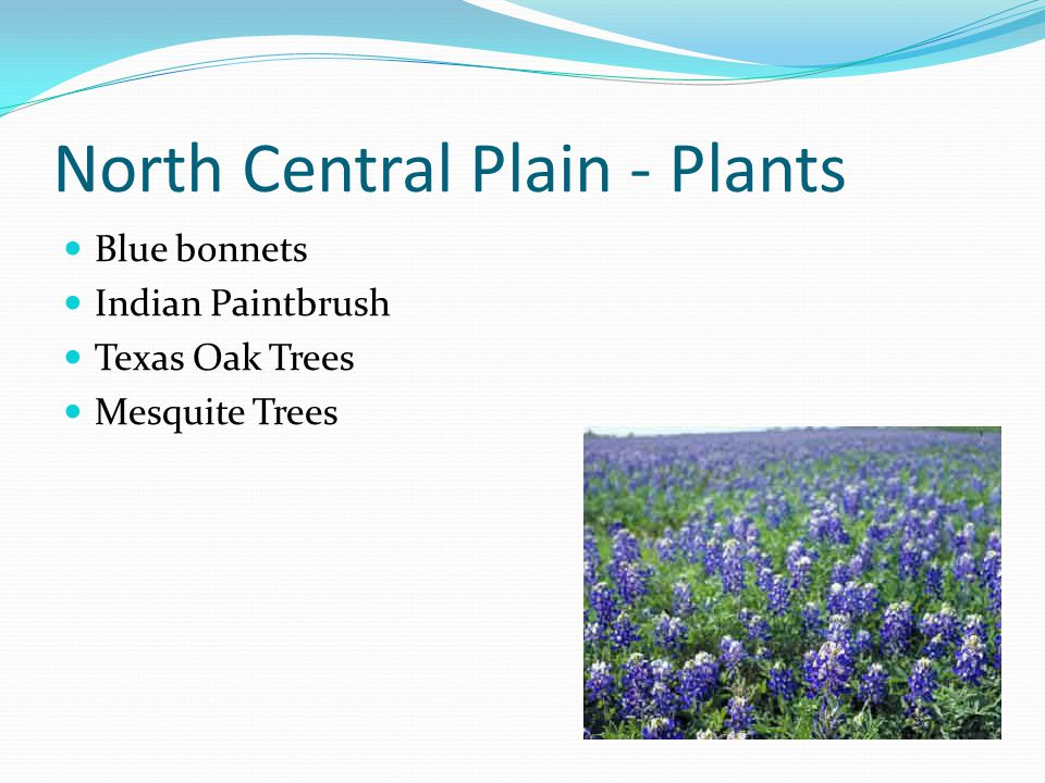 North Central Plain - Plants
