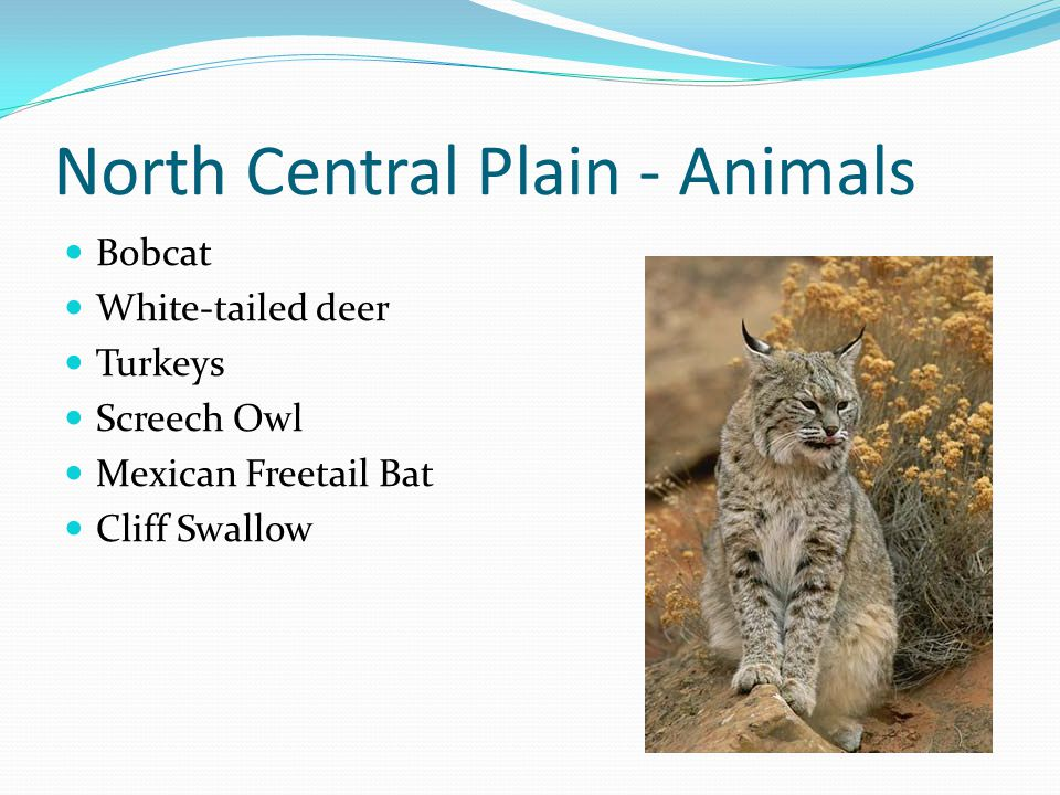 North Central Plain - Animals