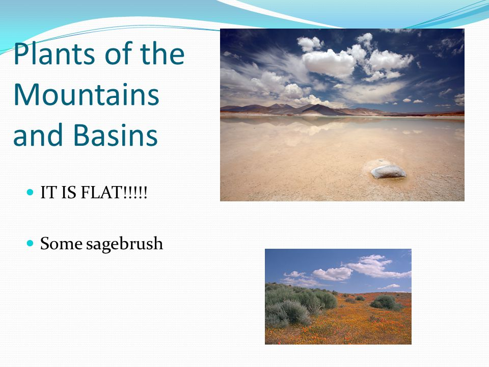 Plants of the Mountains and Basins