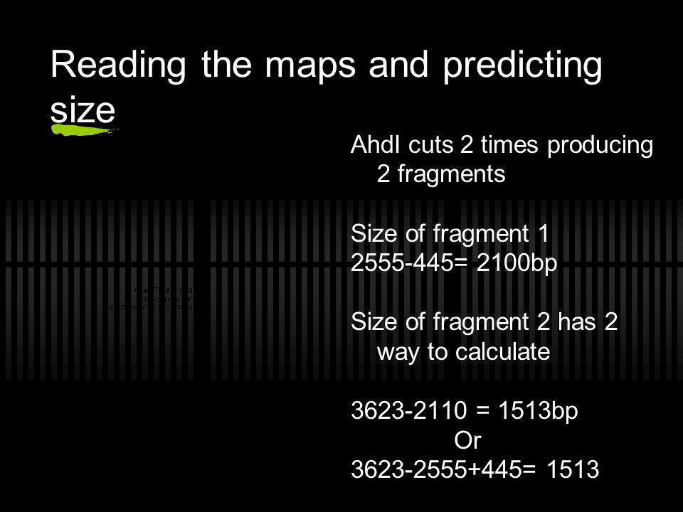 Reading the maps and predicting size