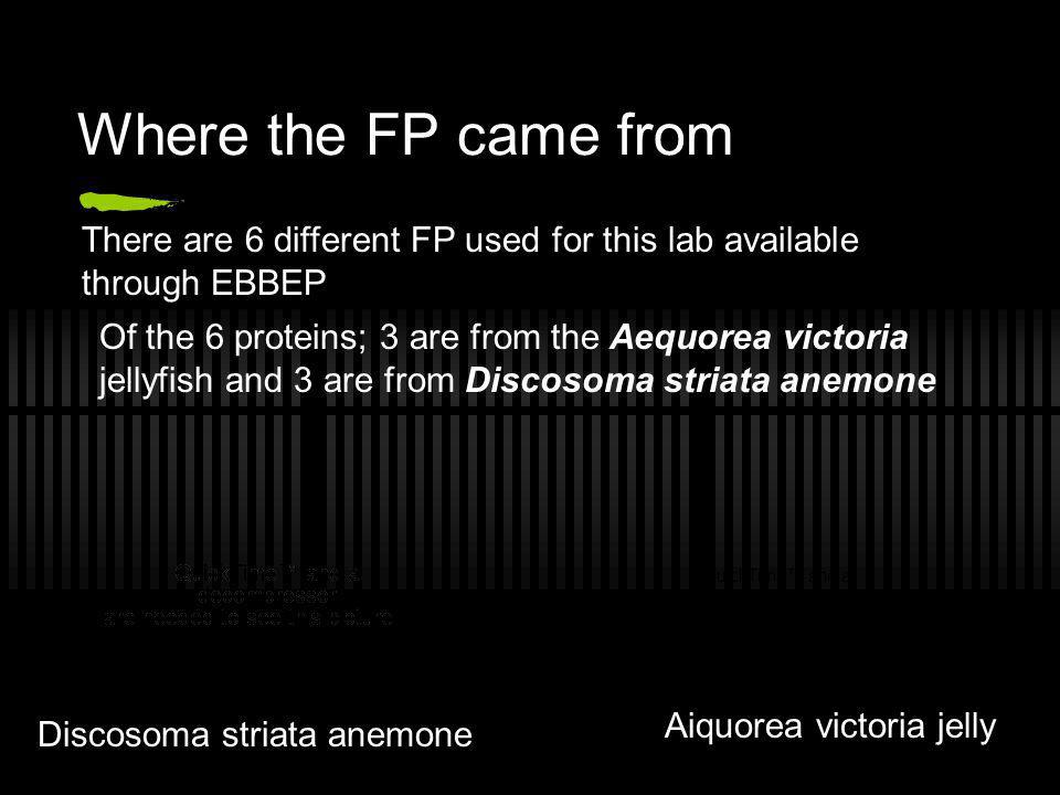Where the FP came from There are 6 different FP used for this lab available through EBBEP.