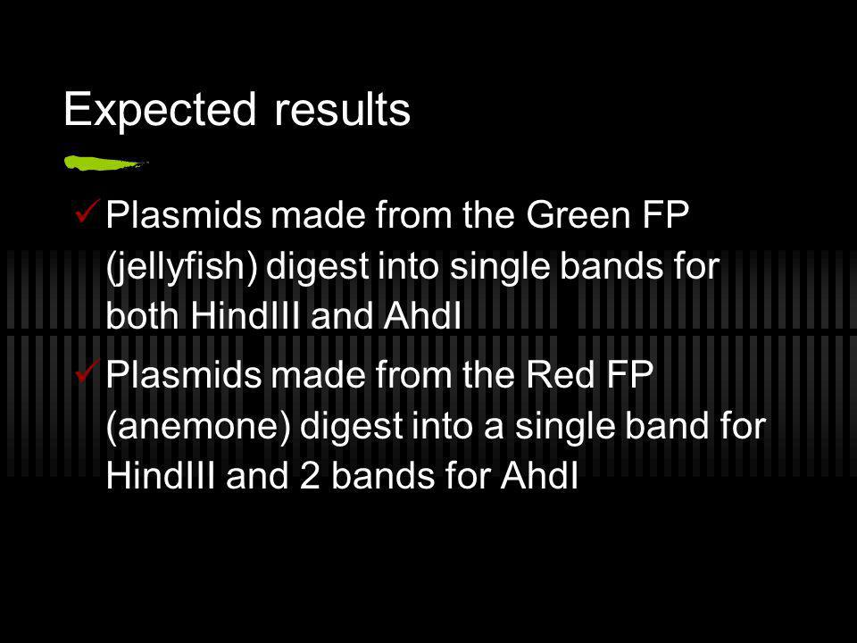 Expected results Plasmids made from the Green FP (jellyfish) digest into single bands for both HindIII and AhdI.