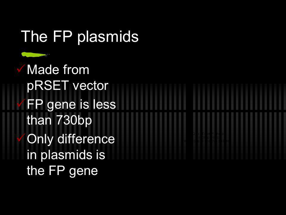 The FP plasmids Made from pRSET vector FP gene is less than 730bp