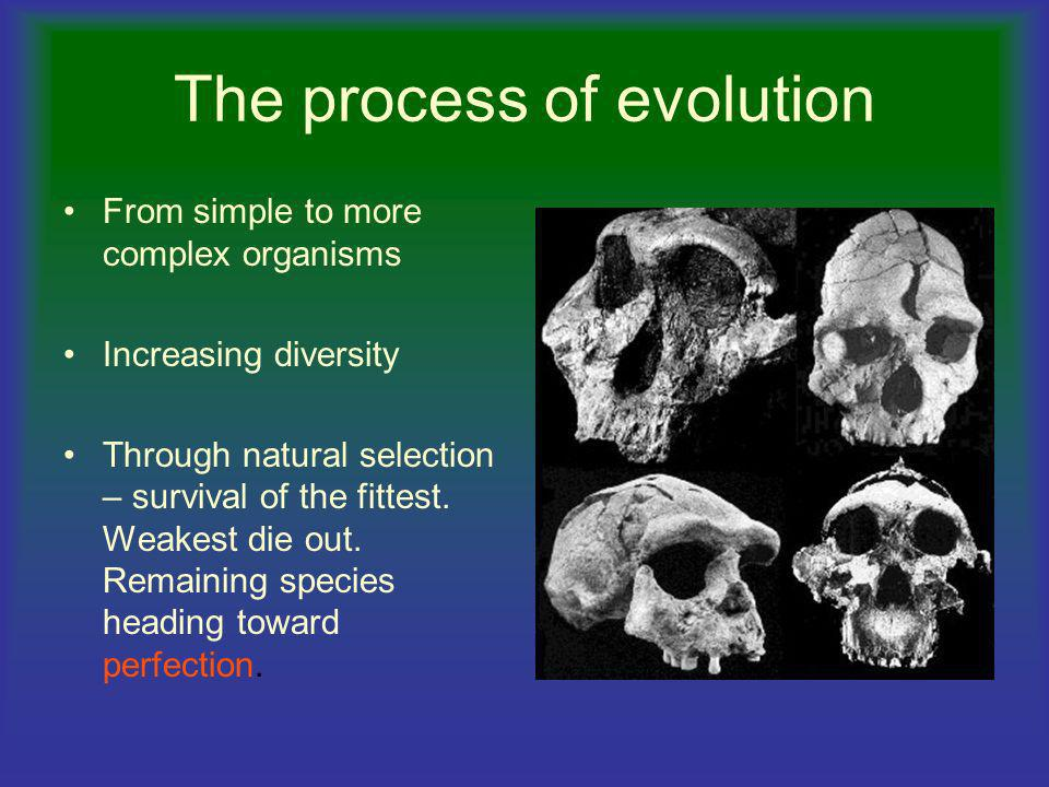 The process of evolution
