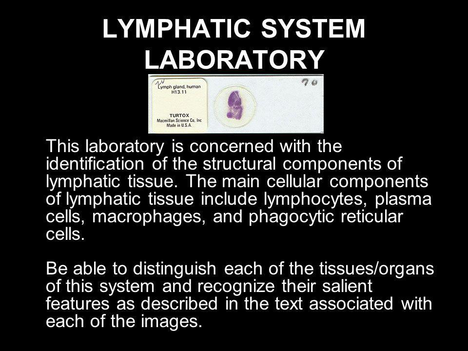 LYMPHATIC SYSTEM LABORATORY