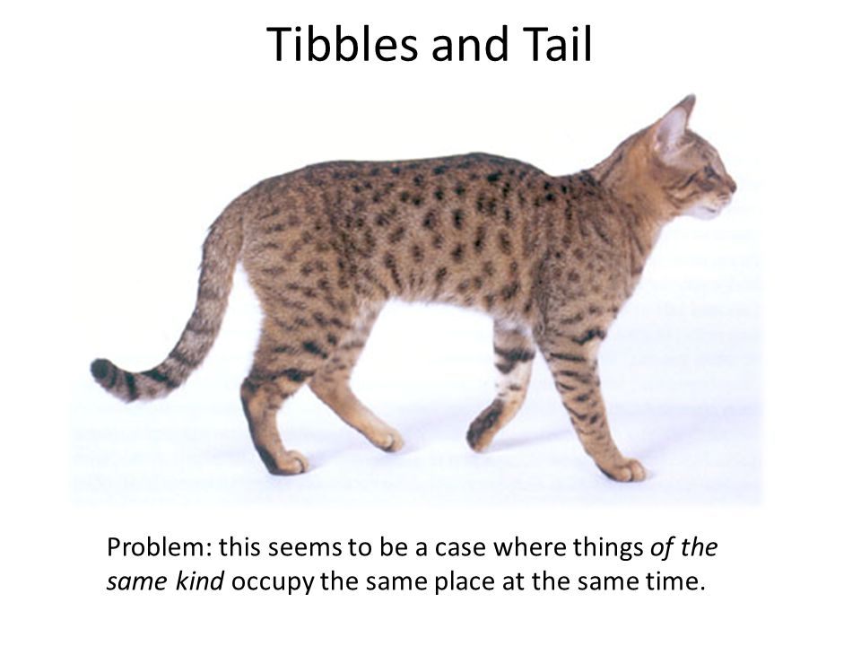 Tibbles and Tail Problem: this seems to be a case where things of the same kind occupy the same place at the same time.