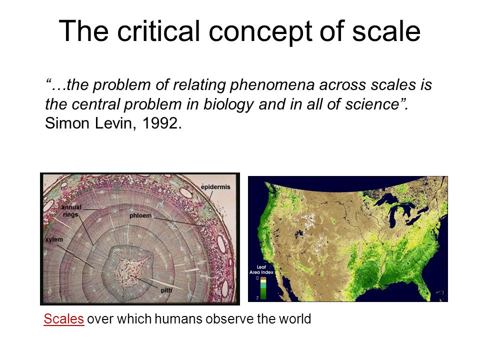 The critical concept of scale