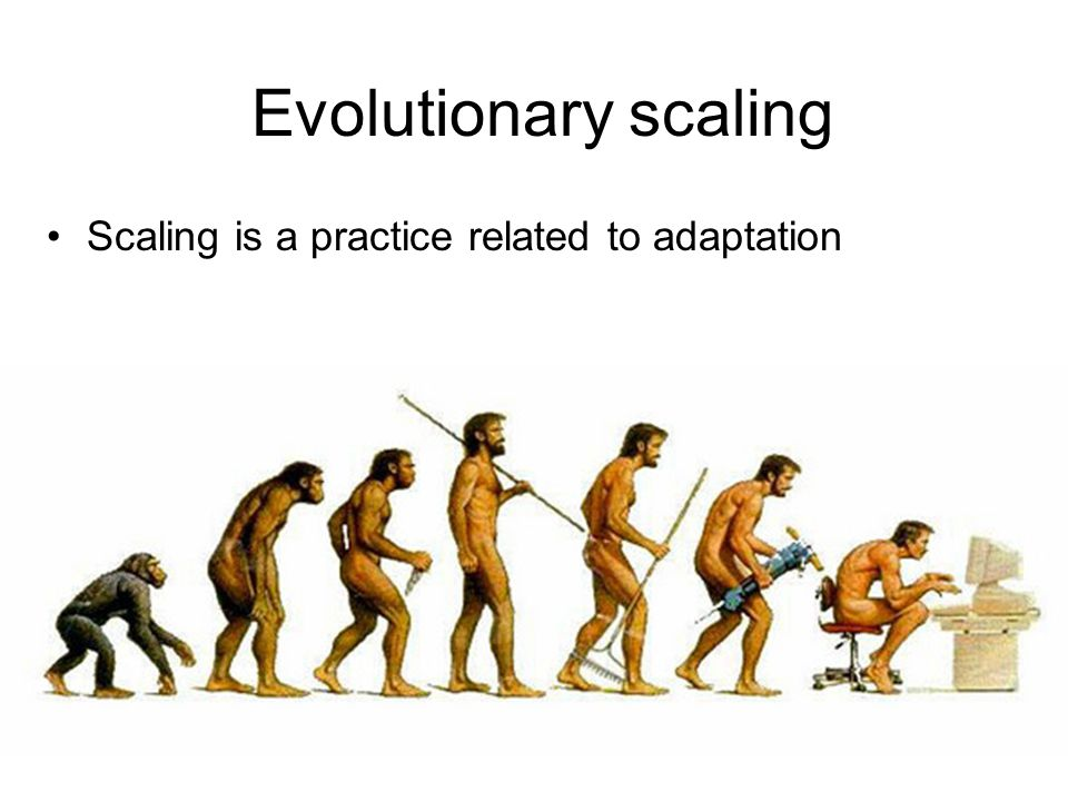 Evolutionary scaling Scaling is a practice related to adaptation