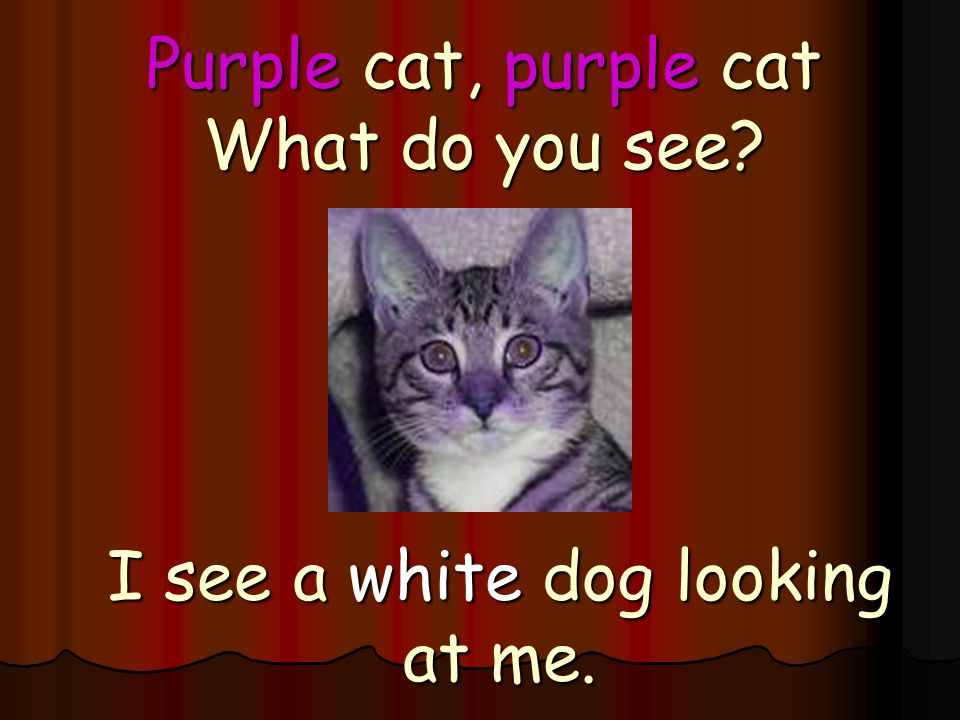 Purple cat, purple cat What do you see