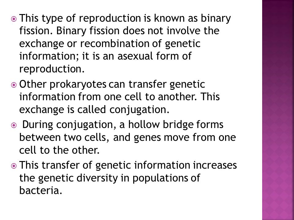This type of reproduction is known as binary fission