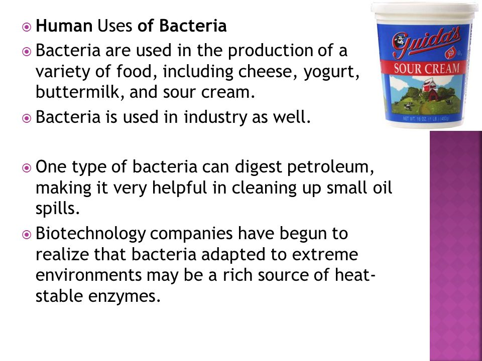 Human Uses of Bacteria Bacteria are used in the production of a variety of food, including cheese, yogurt, buttermilk, and sour cream.
