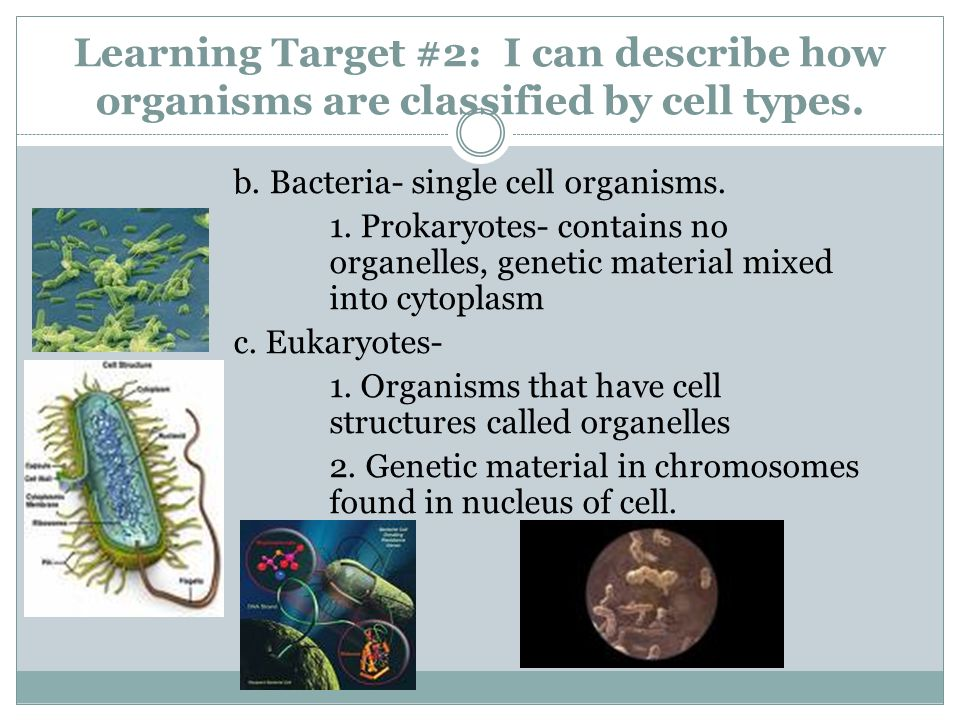 Learning Target #2: I can describe how organisms are classified by cell types.