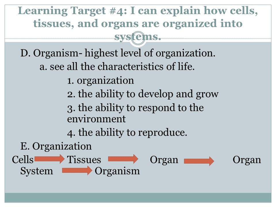 Learning Target #4: I can explain how cells, tissues, and organs are organized into systems.