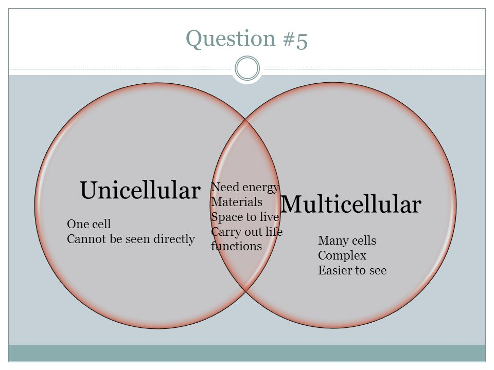 Unicellular Multicellular Question #5 Need energy Materials