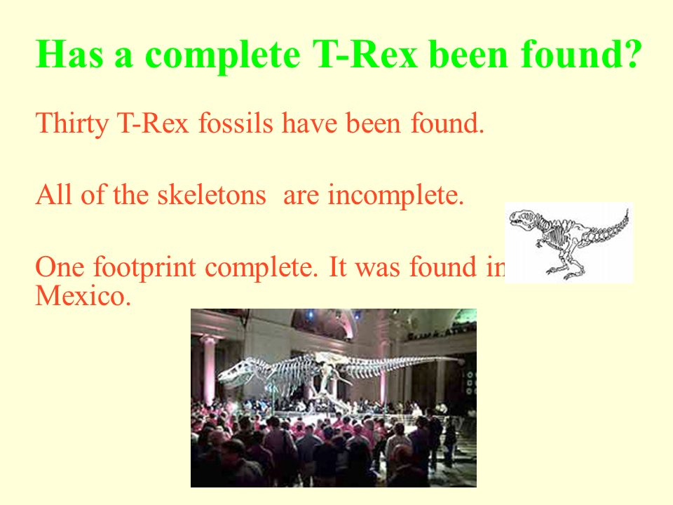 Has a complete T-Rex been found